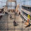 New York Slingerlands Farm 7 March 2021