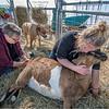 New York Slingerlands Farm 17 March 2021