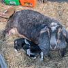 New York Slingerlands Farm 3 March 2021