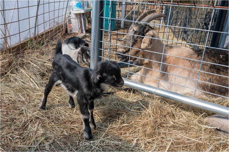 New York Slingerlands Farm 2 March 2021