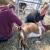New York Slingerlands Farm 19 March 2021
