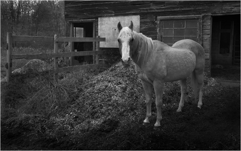 67 Rensselaer County NY Guard Horse May 2003