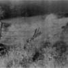 New Scotland NY Meads Lane Farm 7 IR Film May 1991