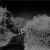 Cohoes NY Peebles Island Meadow Trail  IR Film May 1993
