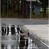Albany NY Yield Sign and Wet Street June 2009