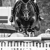 2013-06-06_HorseInB&W_StirlingR_0007