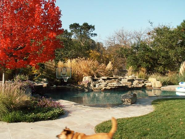 Lafayette Pool Design