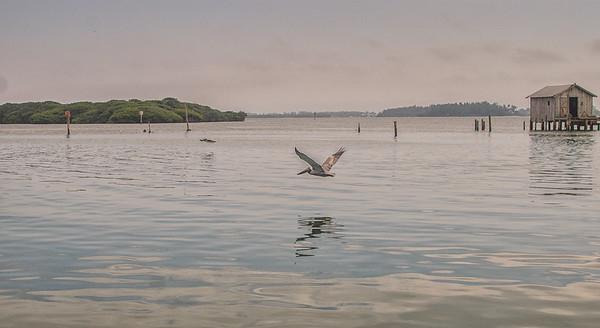 Soaring Fisherman