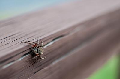 Arachnid Focus