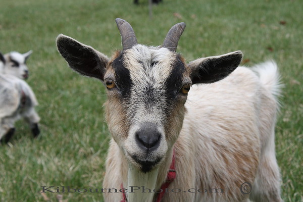 I'm Carmel, I gave birth this year to Jack and Jill.  I want to see them have a good home.