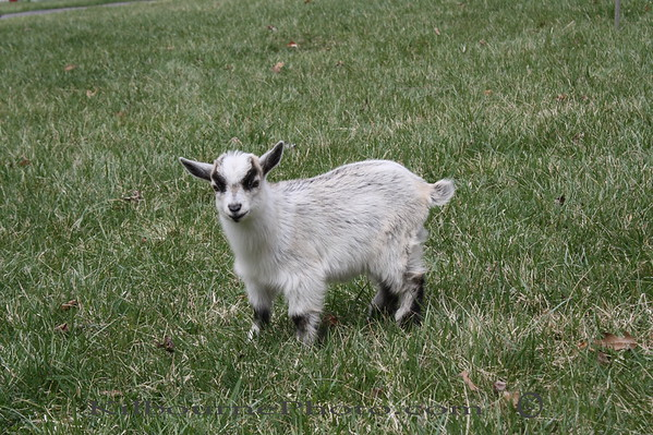 When I run, I look like a Lama!  I was born on Feb 15th 2009