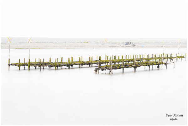 Oyster Beds, Weymouth