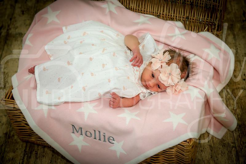 Mollie-39