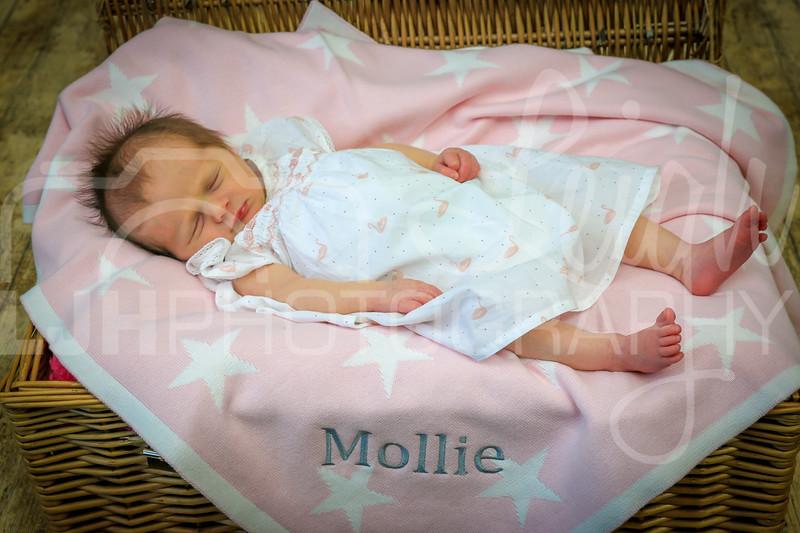 Mollie-83