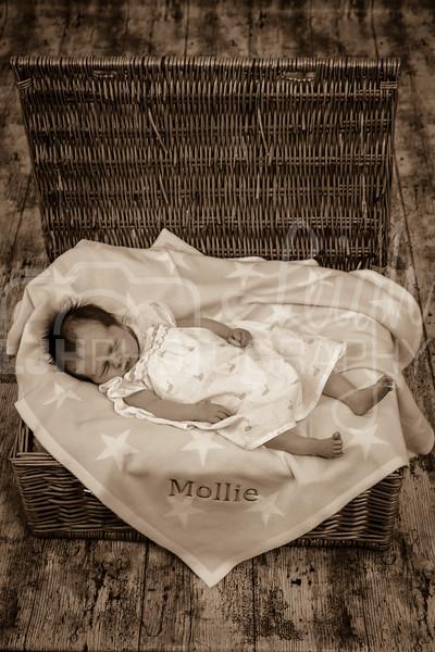 Mollie-82