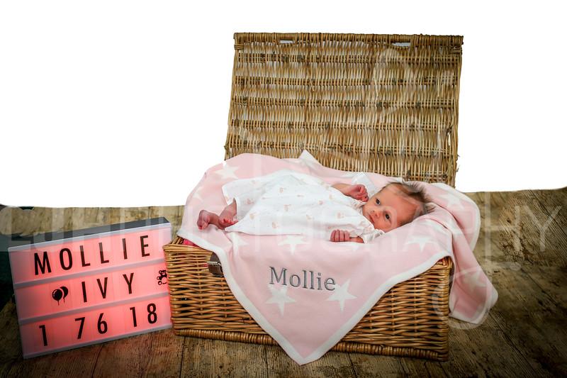 Mollie-34