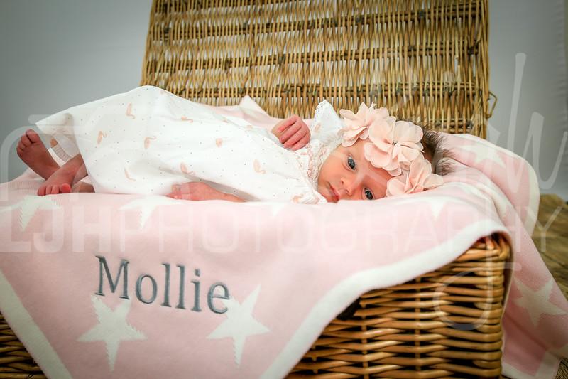 Mollie-36