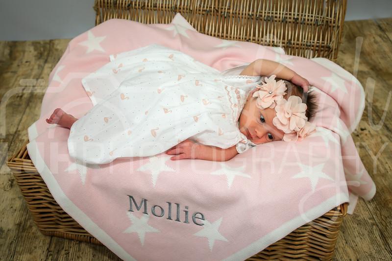 Mollie-40