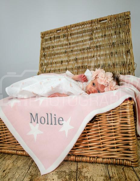 Mollie-37