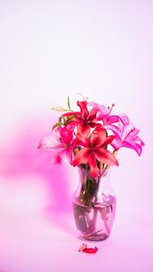 Flowers in Vase - Pink