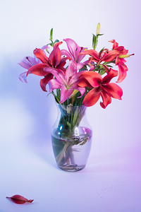 Flowers in Vase - Pink & Blue