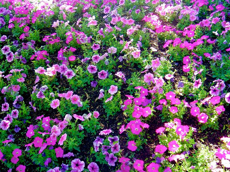 FWBG_2005-04-17_11-21-00_DSC00621_©StudioXephon2005