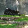 FWZoo_2005-04-17_13-30-40_DSC00662_©StudioXephon2005