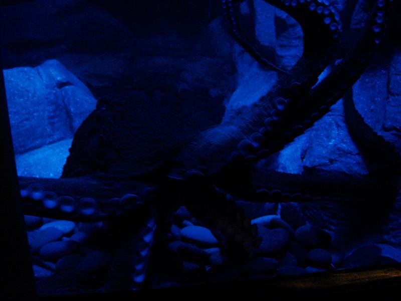 Galveston_2005-08-06_10-40-10_DSC01013_©StudioXephon2005