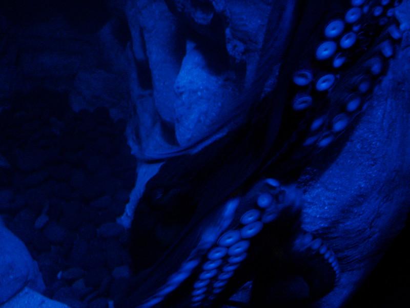 Galveston_2005-08-06_10-40-24_DSC01015_©StudioXephon2005