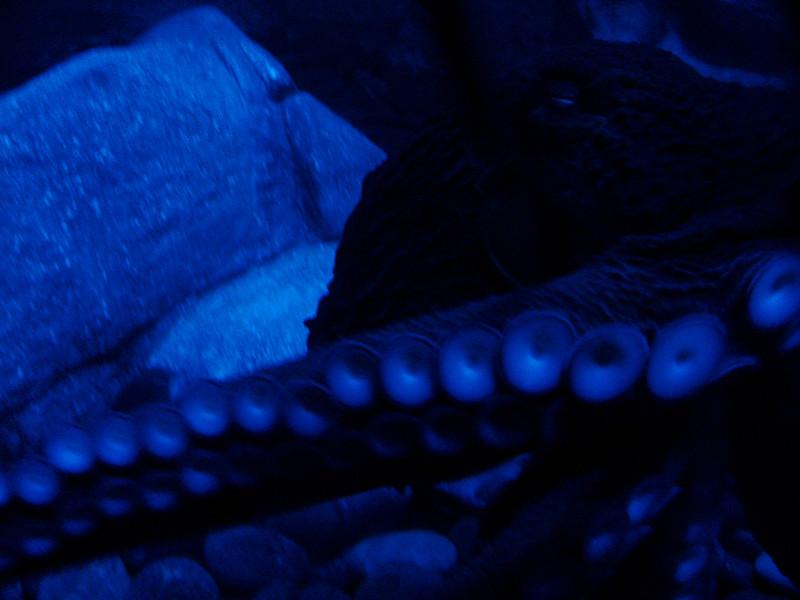 Galveston_2005-08-06_10-40-16_DSC01014_©StudioXephon2005