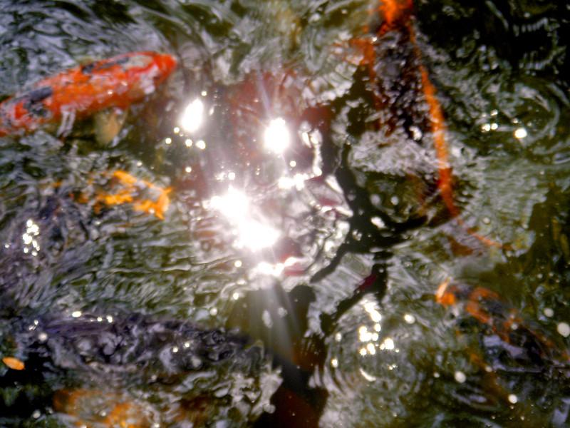FWJapaneseGardens_2006-04-12_14-41-41_DSC01957_©StudioXephon2006