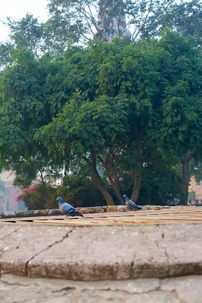 AmazingIndia_2009-12-04_07-25-58_DSC_0945_©StudioXephon2009_C1P