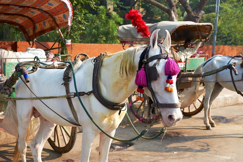 AmazingIndia_2009-12-07_10-09-28_DSC_2090_©StudioXephon2009_C1P