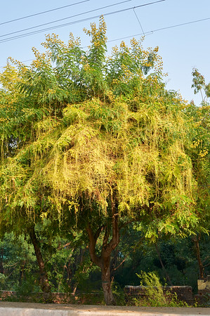 AmazingIndia_2009-12-07_10-03-48_DSC_2080_©StudioXephon2009_C1P