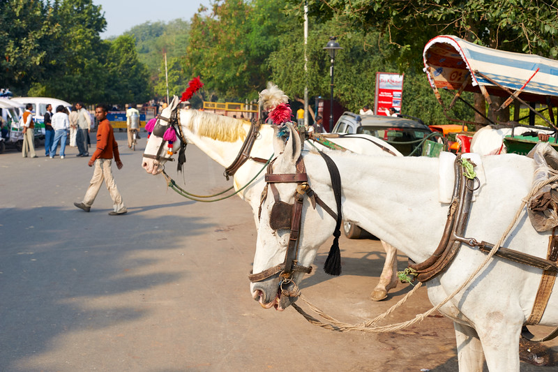 AmazingIndia_2009-12-07_10-09-02_DSC_2088_©StudioXephon2009_C1P