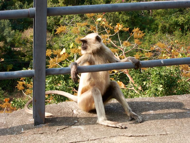 AmazingIndia_2011-01-02_01-00-38_Canon PowerShot S90_IMG_1503_©StudioXEPHON2011_C1P