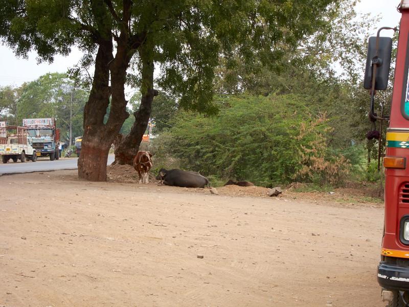AmazingIndia_2010-12-31_03-18-05_Canon PowerShot S90_IMG_1379_©StudioXEPHON2010_C1P