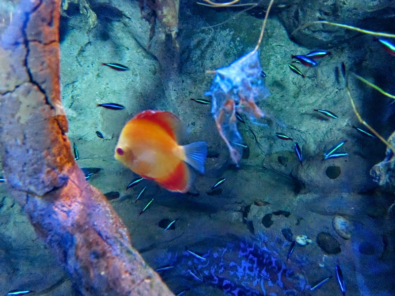 AquariumSmokies_2010-06-27_09-06-35_Canon PowerShot S90_IMG_0380_©StudioXephon2010_C1P