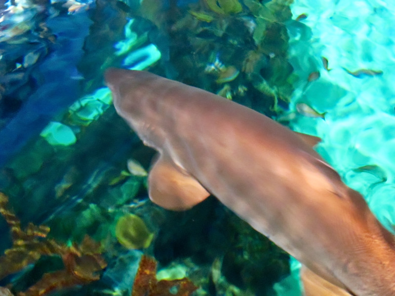 AquariumSmokies_2010-06-27_09-12-55_Canon PowerShot S90_IMG_0389_©StudioXephon2010_C1P