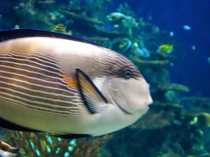 AquariumSmokies_2010-06-27_09-18-44_Canon PowerShot S90_IMG_0400_©StudioXephon2010_C1P