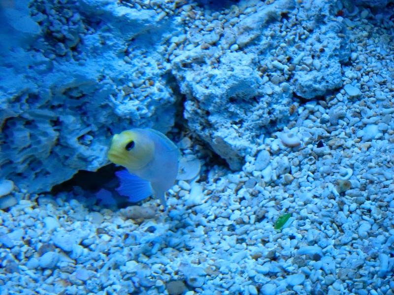 AquariumSmokies_2010-06-27_09-11-52_Canon PowerShot S90_IMG_0388_©StudioXephon2010_C1P