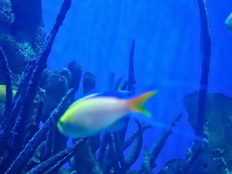 AquariumSmokies_2010-06-27_09-18-20_Canon PowerShot S90_IMG_0399_©StudioXephon2010_C1P