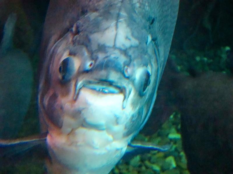 AquariumSmokies_2010-06-27_09-16-32_Canon PowerShot S90_IMG_0395_©StudioXephon2010_C1P