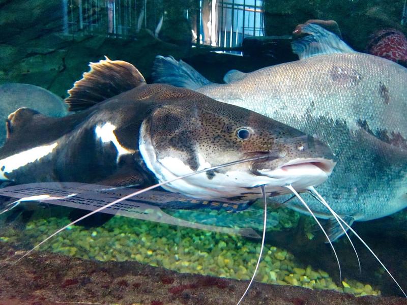 AquariumSmokies_2010-06-27_09-15-15_Canon PowerShot S90_IMG_0392_©StudioXephon2010_C1P