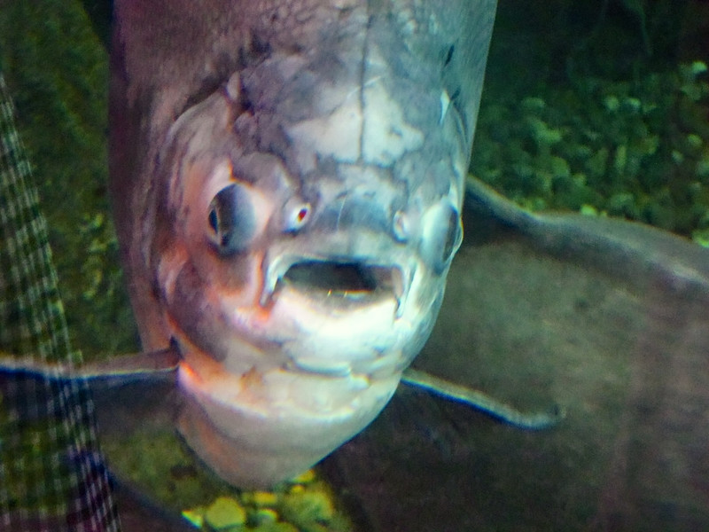 AquariumSmokies_2010-06-27_09-16-45_Canon PowerShot S90_IMG_0396_©StudioXephon2010_C1P