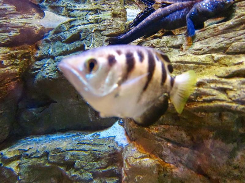 AquariumSmokies_2010-06-27_09-09-01_Canon PowerShot S90_IMG_0384_©StudioXephon2010_C1P