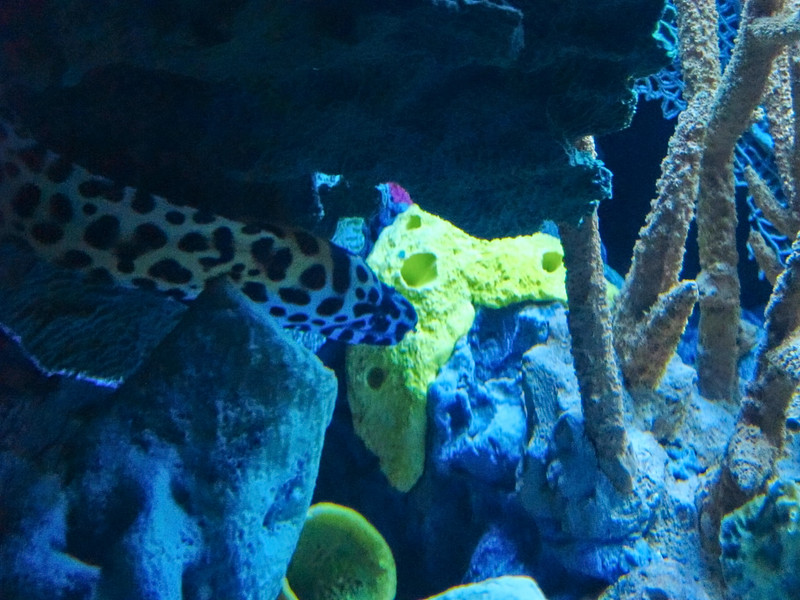 AquariumSmokies_2010-06-27_09-10-02_Canon PowerShot S90_IMG_0386_©StudioXephon2010_C1P