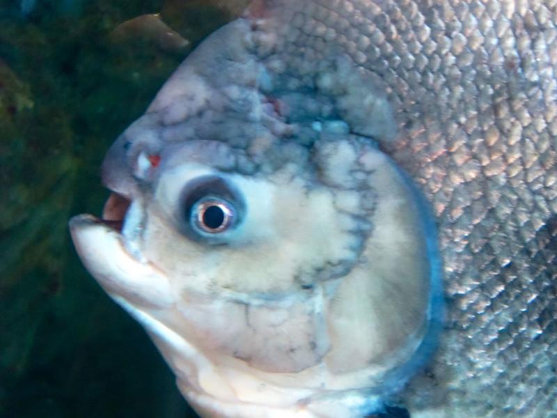 AquariumSmokies_2010-06-27_09-16-56_Canon PowerShot S90_IMG_0397_©StudioXephon2010_C1P
