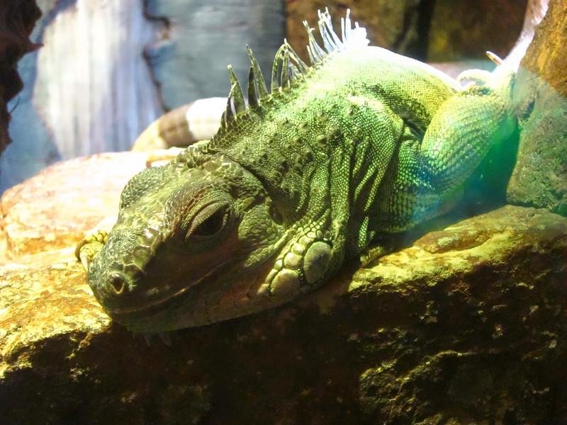 AquariumSmokies_2010-06-27_09-07-54_Canon PowerShot S90_IMG_0382_©StudioXephon2010_C1P