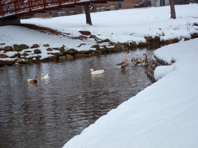 FW_WinterStorm_2010-02-12_12-29-50_IMG_1581_©StudioXephon2010_C1P